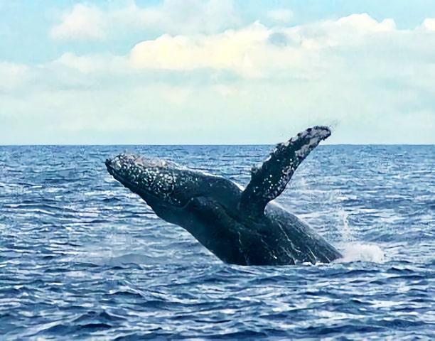 開催以来クジラ遭遇率100%!