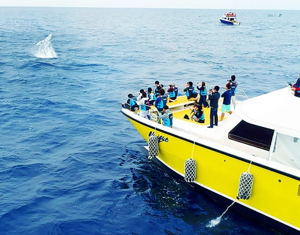 クジラの見やすさへのこだわり!